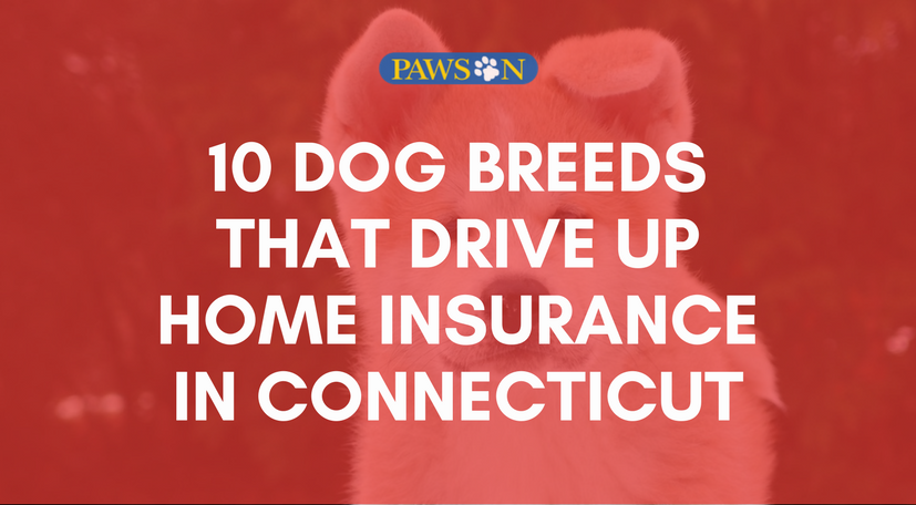 10 Dog Breeds That Drive Up Home Insurance In Connecticut